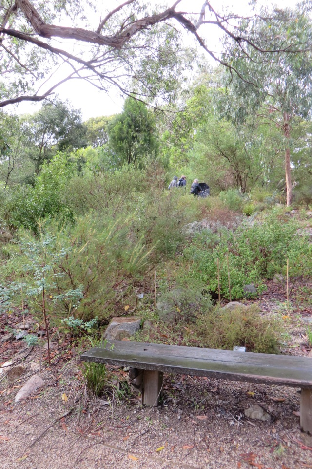 Within the seawinds indigenous garden