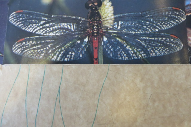 dragonfly wing design