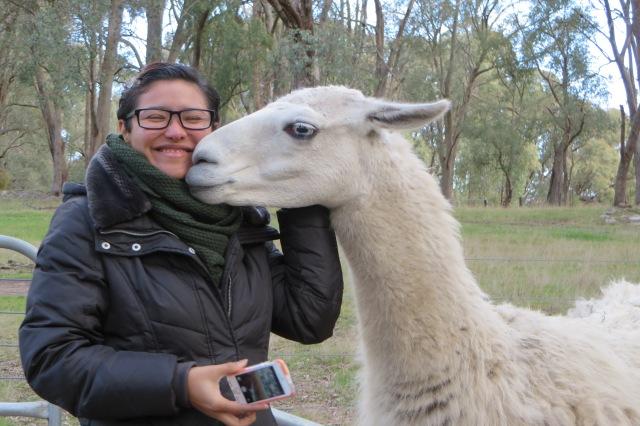 Yale with llama