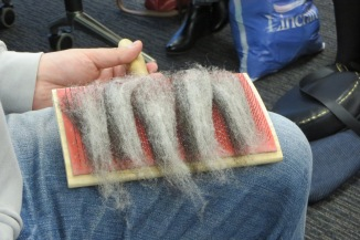 Laying fibre out on hand carder
