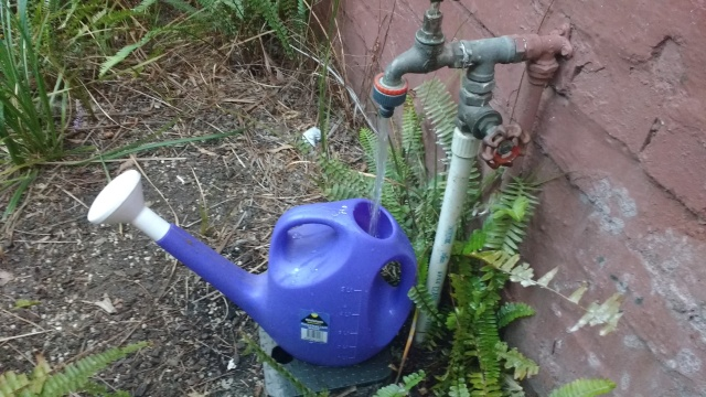 Filling a watering can from a tap