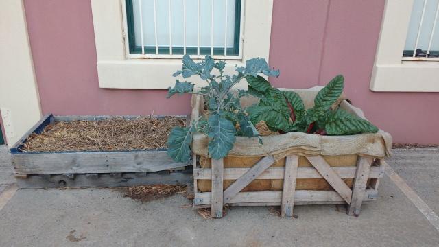 two planter boxes