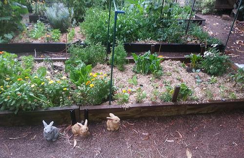 Vegetable garden at Ixchel farm